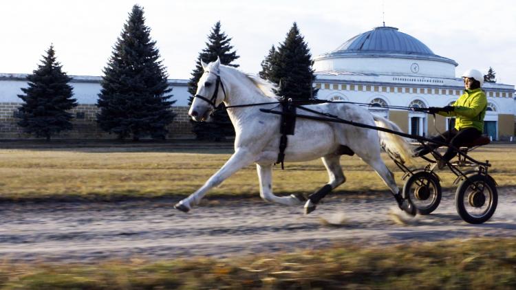 Russlands Pferde 4/5: Traber und Traditionen