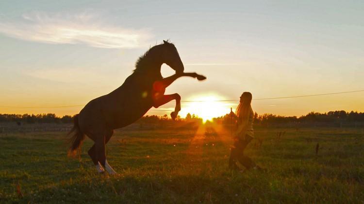 Russlands Pferde 2/5: Streuner und Spielgefährten