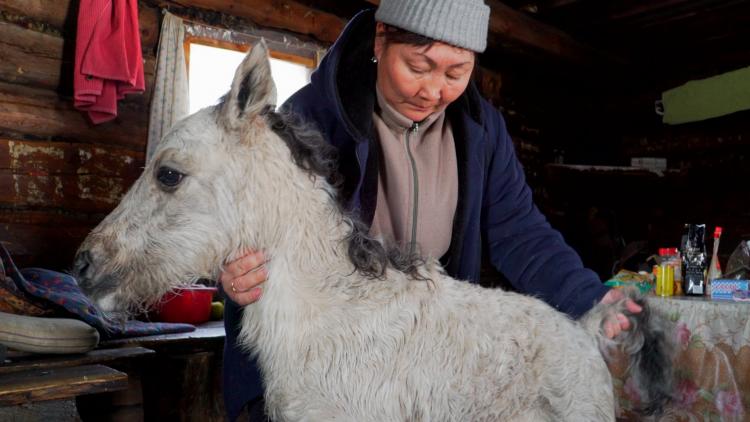 Russlands Pferde 5/5: Eisfohlen und Berghirten